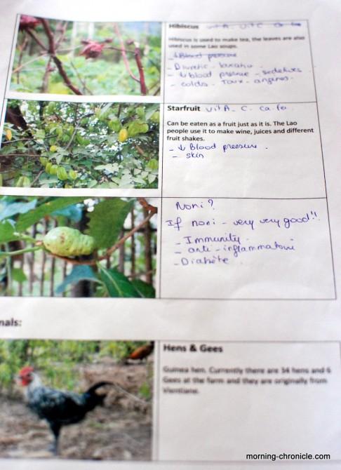 Juliette aide à identifier et à qualifier les plantes