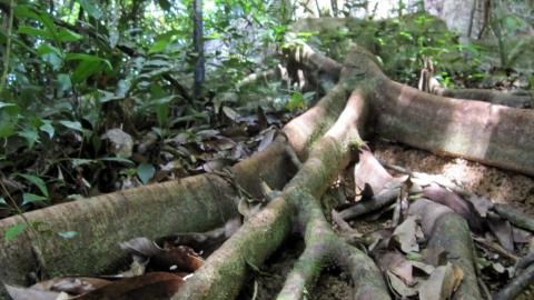 17km dans la jungle et autant de sangsues