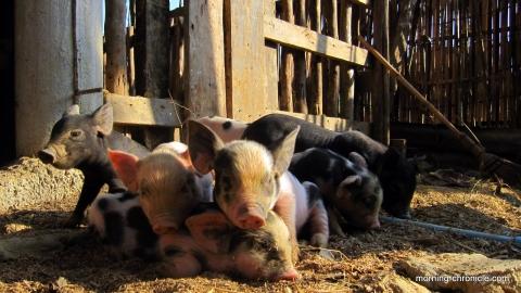 Vang Vieng : Organic Farm
