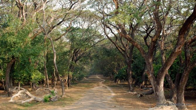 Chemin de traverse à Angkor