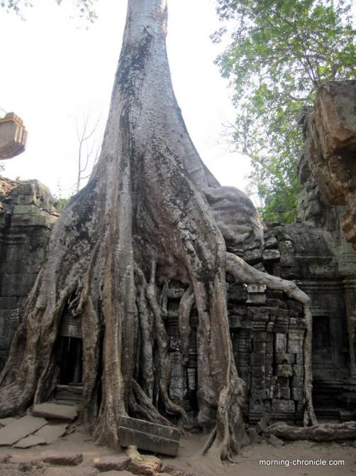 La nature reprend ses droits à Angkor