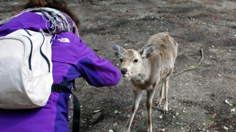 Nara avec Miho