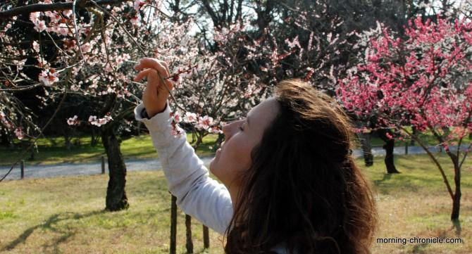 Parfum de printemps au Japon