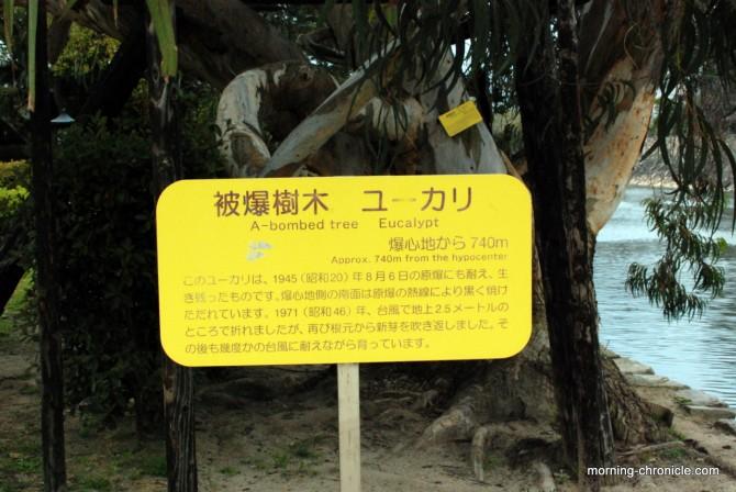 Un des trois eucalyptus qui a survécu à la bombe A (château d'Hiroshima)