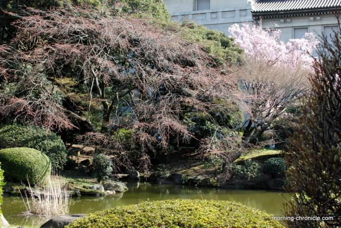 Cerisier en fleur dans le parc du musée Nationale