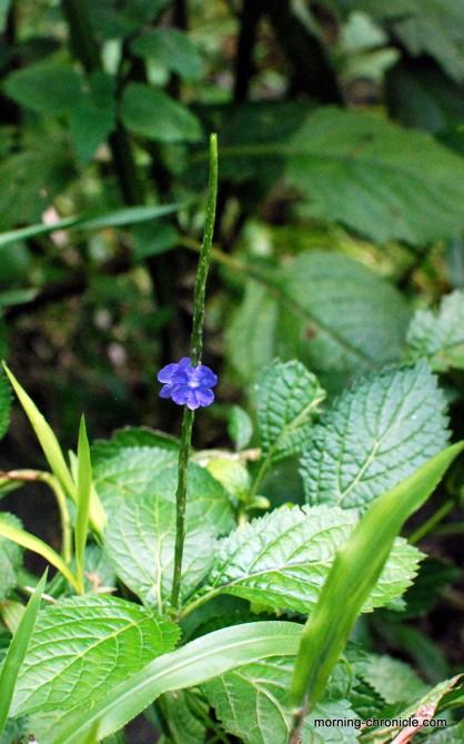 Nos couleurs pour la fleur bleue