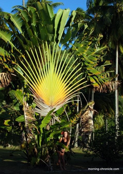 Palmier et vahiné