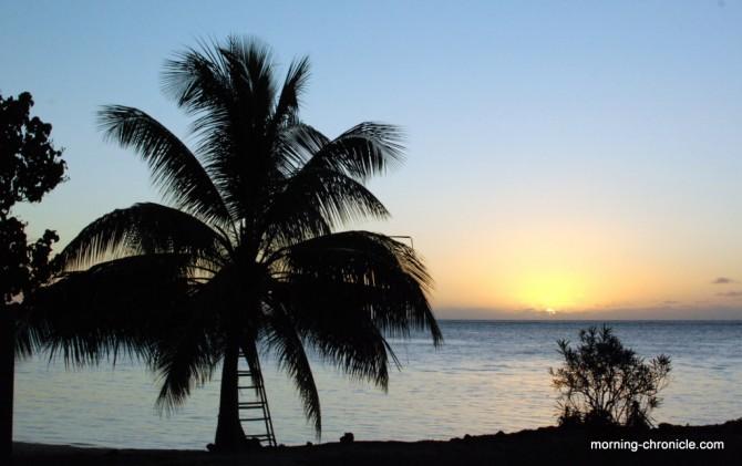 Palmier au coucher du soleil