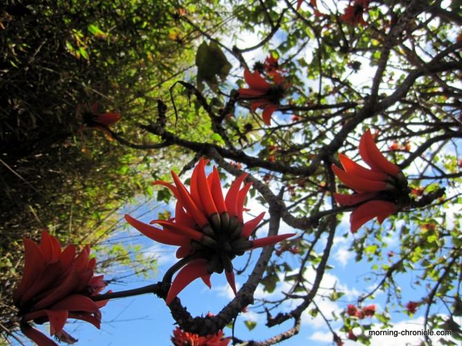 Fleur piment