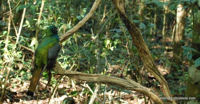Oiseau vert et bleu