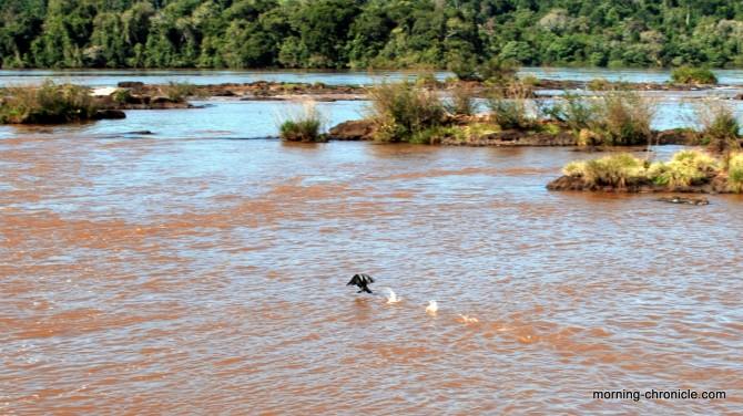 Iguaçu le fleuve