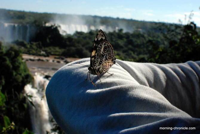 Mariposa d'Iguaçu