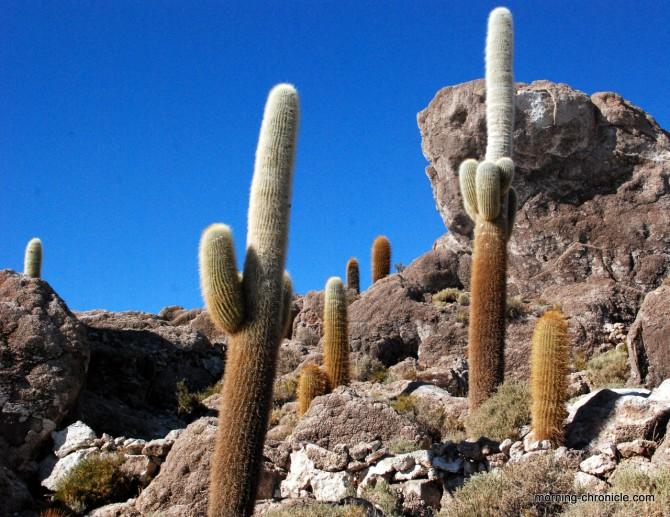 Cactus de la isla pescado