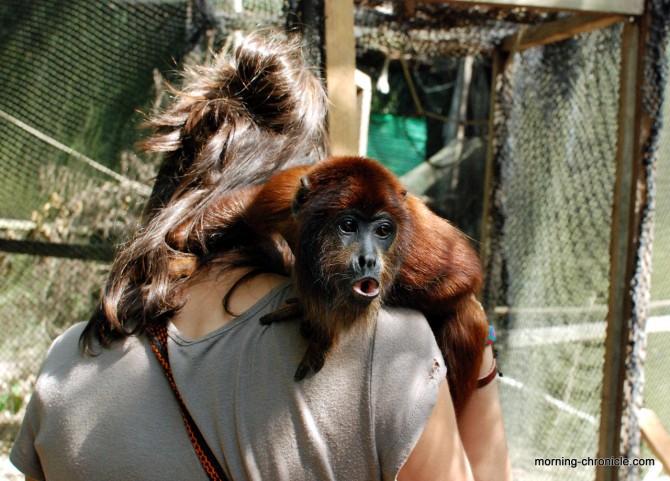Allegra et un singe coquin