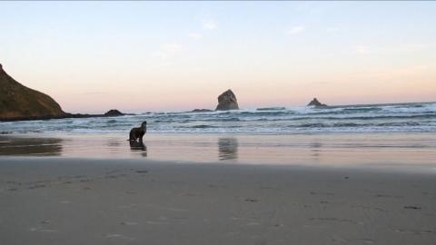 Nouvelle-Zélande: Le rush vidéo