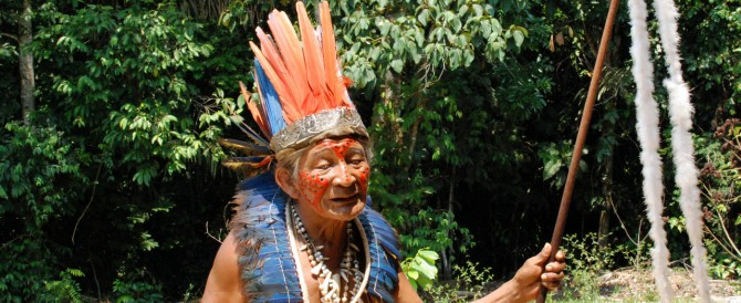 Manaus : over[pause] de chlorophylle